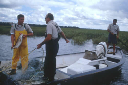 Saltwater recreational fishing license program for Scdnr fishing report