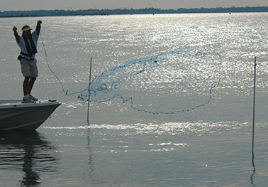 Throwing a net during Shrimp-baiting season
